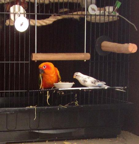 spaghetti-birds